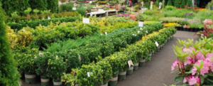 How to select plant for your garden from nursery