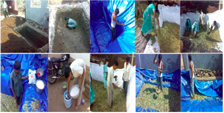 Guidelines for Nutritious and Safe silage making - ABC of Agri