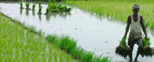 Indian Government Schemes in Agriculture
