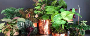 Maintenance of potted plants