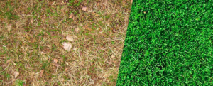 5 criteria to evaluate a damaged lawn