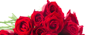 Which flowers to choose to express your love?