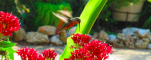 Birds and butterflies: how to attract them to our garden?
