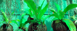 A short guide to indoor exotic plants