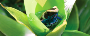 A promising artificial photosynthesis inspired by… a frog