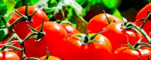 Scarlet pumpkin, Bern rose, barbaniaka: the shapes of the tomato