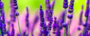 HEALTH: 5 AMAZING REMEDIES: THANKS TO THE PLANTS