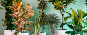 Indoor Plants: 6 Tips for Servicing