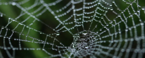 Spider silk: the secrets of its resistance finally revealed