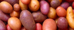 Potatoes: a living heritage