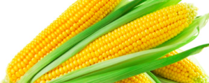 "All about ""Corn / Maize"""