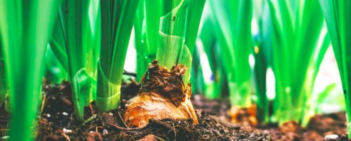 mulching in the kitchen garden allows life to flourish abc of agri