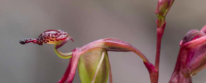 All you ever wanted to know about sex in plants (2 of 3)