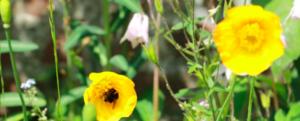 Audrey's column: bringing biodiversity to my garden.