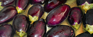 All about Eggplant/Brinjal: Low-calorie vegetable