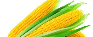 Introduction to Sweet Corn