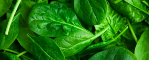 Spinach – The Good Leaves – The Myth of Popeye