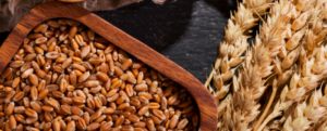 "All about ""Wheat"", a staple of our diet?"