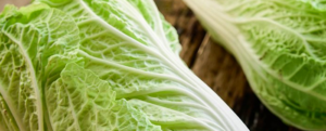 "All about ""Chinese cabbage"""