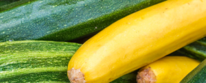 "All about ""Squash"", a vegetable rich in fiber"