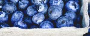 "All about ""Blueberry"""