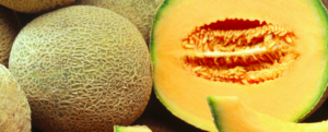 "All about ""Melon"", the flagship fruit of summer"