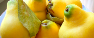 "All about ""Quince"""