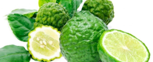 "All about ""Combava / Kaffir lime"""