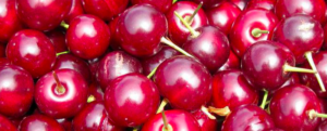 "All about ""Morello cherry"""