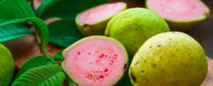 "All about ""Guava"""