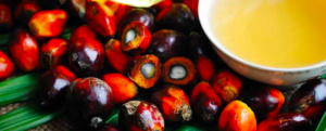 "All about ""Palm oil"""