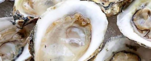"All about ""Oyster"""