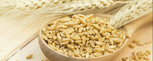 "All about ""Barley"", a fiber-rich grass"