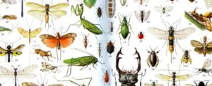 Insect study – Entomology