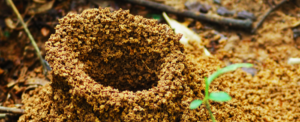 Build an anthill – Raising insects